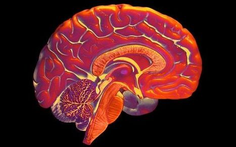 Students should learn second language to prevent dementia in later life   Cognitive Neuroscience   Scoop.it