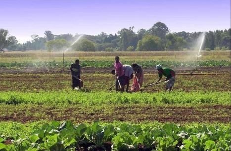 L'agroécologie, c'est quoi ce truc? | Questions de développement ... | Scoop.it
