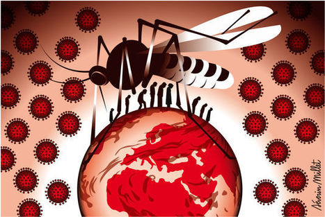 Le virus du chikungunya s'installe aux Antilles | Toxique, soyons vigilant ! | Scoop.it