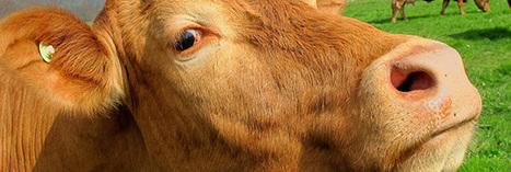 Ferme des Mille Vaches : la construction reprend... | Manger autrement - S'informer | Scoop.it