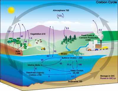 Ciclo do carbono   Biologia-aulas de 2013   Scoop.it