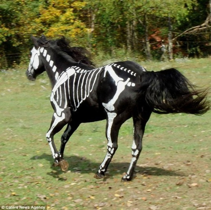 Woman transforms her horse into a skeleton | Kitsch | Scoop.it