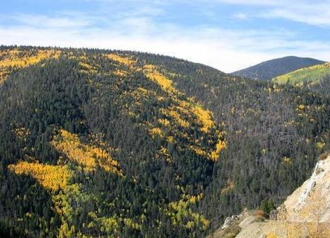 New Mexico's Enchanted Circle near Taos a top leaf-peeping option | what to do in New Mexico | Scoop.it