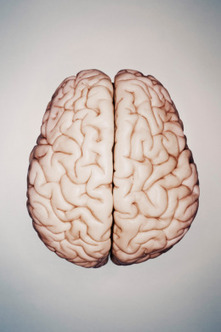 Understanding How the Brain Speaks Two Languages   TIME.com   Translation World   Scoop.it