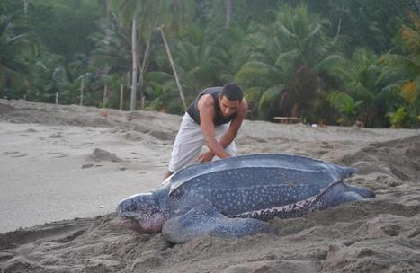 PHOTOS: Teen's Inspiring Turtle Rescue | Freefire Nature | Scoop.it