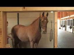 Just-Horses Typical Equine Massage Session on the Just Horses Channel | Equine massage | Scoop.it