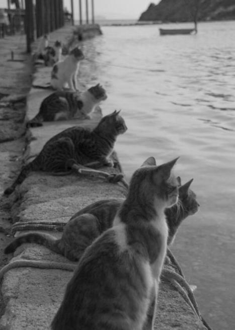 Twitter / History_Pics: Cats waiting for the fishermen ... | Cats Rule the World | Scoop.it