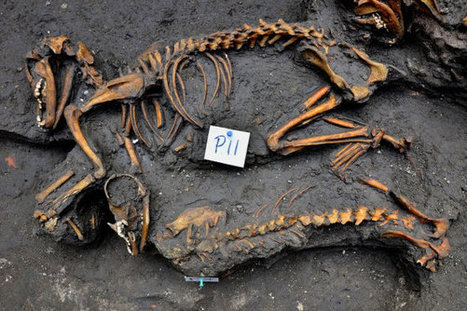 Archaeologists in Mexico Unearth Ancient Dog Burial Site - FEARnet.com | Ancient History | Scoop.it
