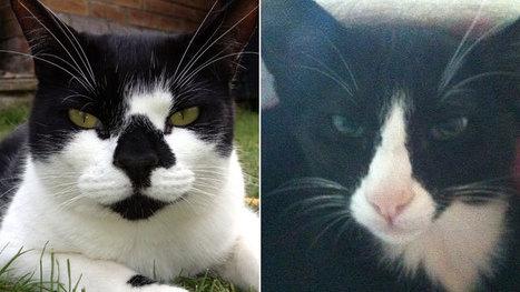 Kleptomaniac cats' Christmas stash | Feline Health and News - manhattancats.com | Scoop.it