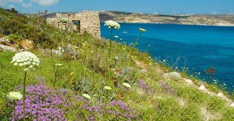 Malte : feu vert pour la chasse de 5000 tourterelles menacées d'extinction   EnezGreen   Tourisme insulaire durable   Scoop.it