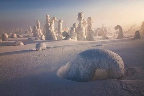 Amazing Photos of Trees Frozen in Subzero Temperatures | Navigate | Scoop.it