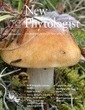 Phytophthora infestans Argonaute 1 binds microRNA and small RNAs from effector genes and transposable elements - Åsman - 2016 - New Phytologist - Wiley Online Library | Oomycetes | Scoop.it