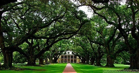 Confessions of a Napper: Oak Alley | Oak Alley Plantation: Things to see! | Scoop.it