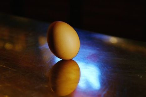 La flambée du prix des œufs pénalise l'agroalimentaire | Actualité de l'Industrie Agroalimentaire | agro-media.fr | Scoop.it