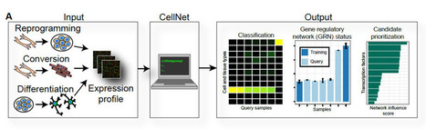 CellNet - a novel computational platform for cellular engineering and stem cell research | Stem Cells & Tissue Engineering | Scoop.it