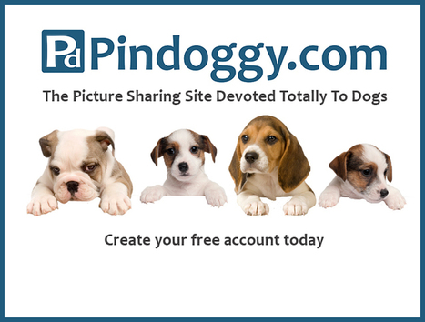 Pindoggy News | Dog Pictures - Pindoggy | Scoop.it