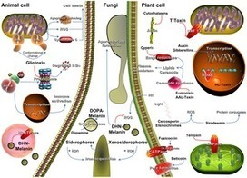 Human and Plant Fungal Pathogens: The Role of Secondary Metabolites | Plant Biology Teaching Resources (Higher Education) | Scoop.it