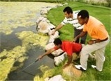 Control Blanket weed or Filamentous Algae in Ponds and Lakes | Hydra Crystal | Scoop.it