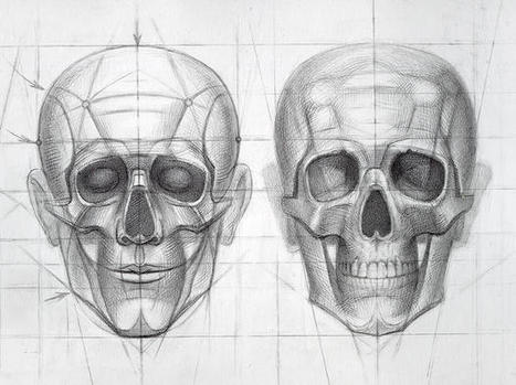 Human Skull / Stages of drawing construction - detail I | Art Education | Scoop.it