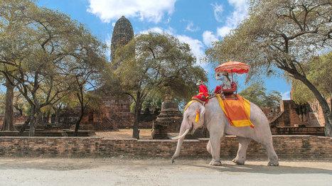À éviter: 10 activités touristiques cruelles pour les animaux | Ecotourisme | Scoop.it