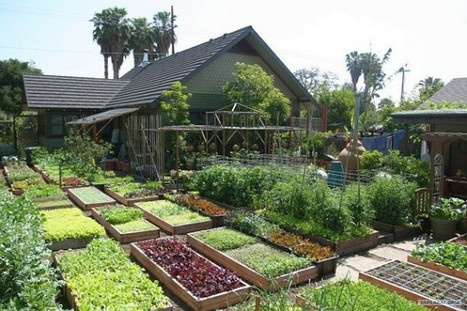 Learn How This Family Grows 6,000 Lbs Of Food on Just 1/10th Acre | Wandering Salsero | Scoop.it