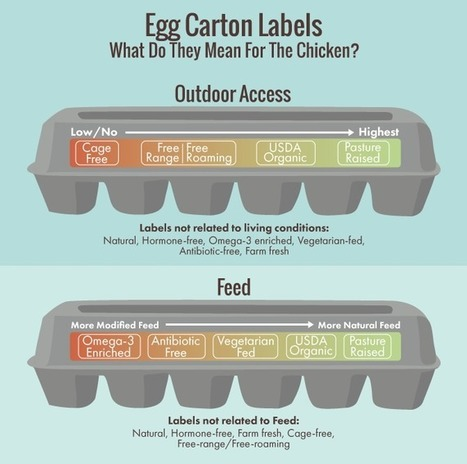 (EN) - Eggsposing Eggs: What Labels Really Mean For You and the Chicken | Andrea Moore | Glossarissimo! | Scoop.it