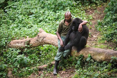 ALLPE Medio Ambiente : Mi amigo huérfano el gorila de montaña | BROTES DE NATURALEZA | Scoop.it