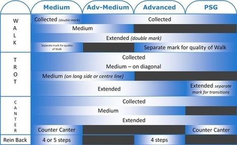 Dressage Test Movements Medium to PSG Level | Dressage | Scoop.it