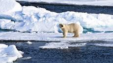 El Polo Norte se derrite: el deshielo en el Ártico bate récord | El agua, fuente cristalina de nuestra supervivencia | Scoop.it