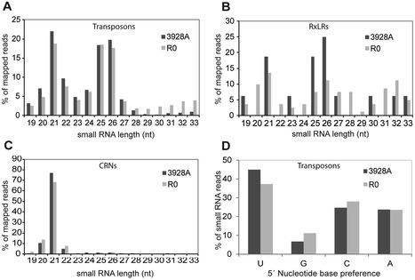 PLOS ONE: Evidence for Small RNAs Homologous to Effector-Encoding Genes and Transposable Elements in the Oomycete Phytophthora infestans (2012) | Plant Pathogenomics | Scoop.it