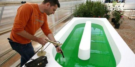 A Sophia-Antipolis (Alpes-Maritimes), on invente les microalgues : le biocarburant du futur   EDD-Robert Schuman   Scoop.it