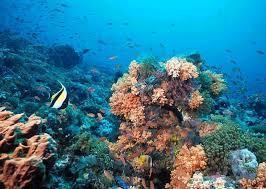 ecosistemas acuaticos | ecosistemas | Scoop.it