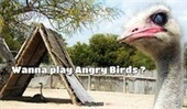 Wanna play Angry Birds ? | Slapix | Scoop.it