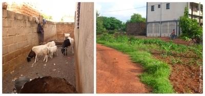 L'agriculture urbaine dans la ville africaine | Les colocs du jardin | Scoop.it