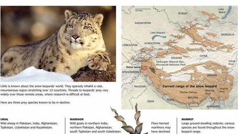 Elusive Cats and Their Endangered Prey - New York Times | Cats & Teapots | Scoop.it