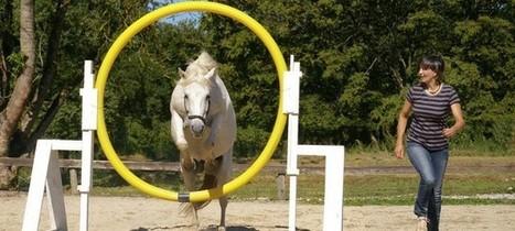 L'Equility, nouvelle discipline équestre avec la voix et le cheval   Equum.fr   Cheval et sport   Scoop.it