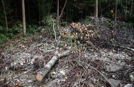 China: Forests Threatened by Logging | Pulitzer Center | Ecology | Scoop.it