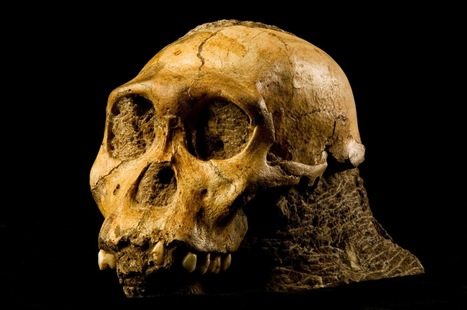 Human 'missing link' fossils may be jumble of species | Newsworthy Notes - Apologetics | Scoop.it