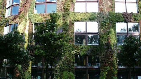 L'installation de murs végétaux, priorité des parisiens   Le bonheur aujourd'hui   Scoop.it