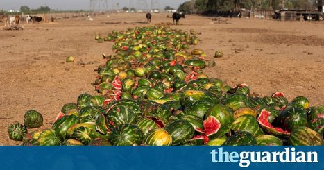 Half of all US food produce is thrown away, new research suggests | Knowmads, Infocology of the future | Scoop.it