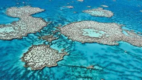 Plan won't save Great Barrier Reef: Australian scientists | KNOWING............. | Scoop.it