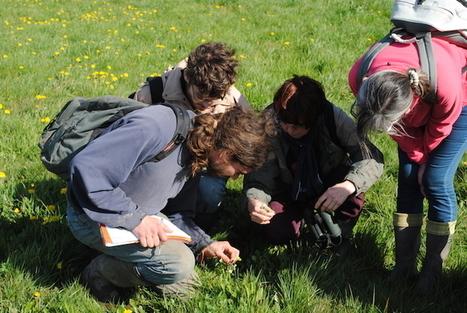 «La zone humide de Notre-Dame-des-Landes est un milieu irremplaçable»   Variétés entomologiques   Scoop.it
