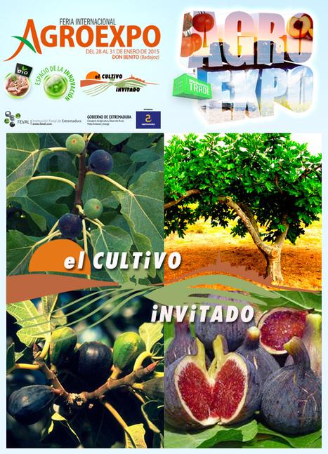 Agroexpo dedica una jornada técnica al cultivo de la higuera | GeoActiva Turismo de Aventura | Scoop.it