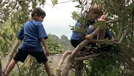 Kids banned from trees   Bubble Wrap Revolution   Scoop.it
