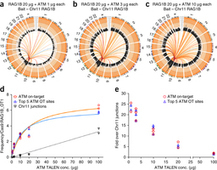 Genome-wide detection of DNA double-stranded breaks induced by engineered nucleases - Nature Biotech. | genome editing | Scoop.it
