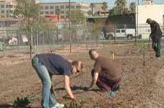 Urban garden used to feed and train homeless | KPHO (TV-Phoenix) | CALS in the News | Scoop.it