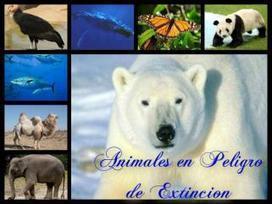 Animales en peligro de extinción - 20minutos.es | Animales en peligro de Extinción | Scoop.it