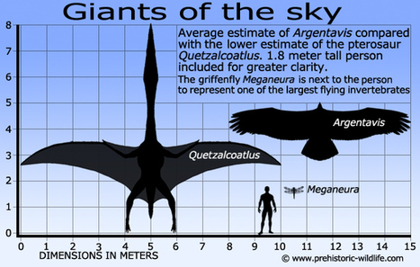 Giants of the sky: Argentavis | Amazing Science | Scoop.it