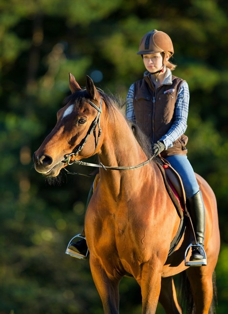 Lacey Urgent Care: Horse Riding Safety Precautions for Equestrians | U.S. HealthWorks Lacey | Scoop.it