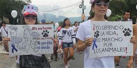 Ahora quienes maltraten animales tendrán que pagar hasta $ 38 millones - Gobierno - El Tiempo   POR BOGOTA   Scoop.it